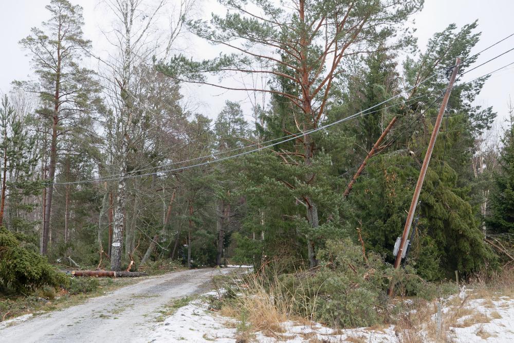 Myrskyn kaatamia puita sähkölinjojen päällä.